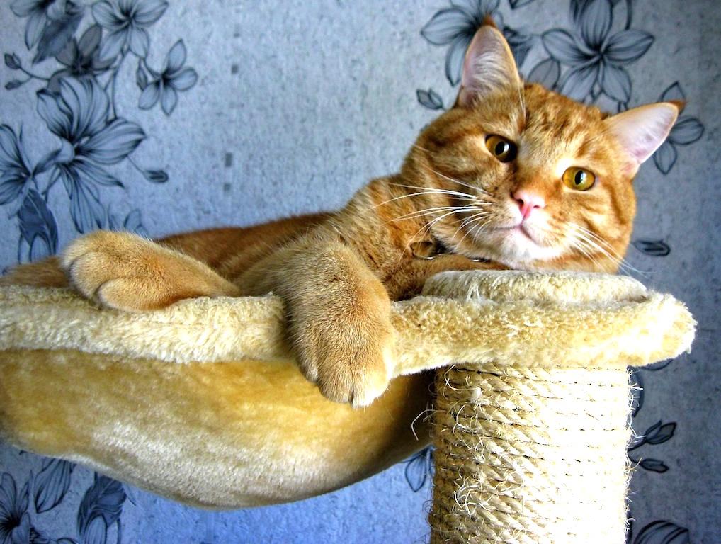 cat-968203_1280