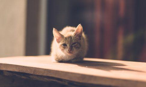 cat-1593057_1280